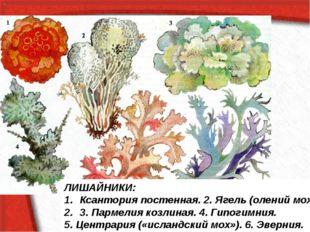 ЛИШАЙНИКИ: Ксантория постенная. 2. Ягель (олений мох). 3. Пармелия козлиная.