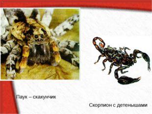 Скорпион с детенышами Паук – скакунчик
