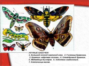 НОЧНЫЕ БАБОЧКИ: 1. Большой ночной павлиний глаз. 2. Гусеница бражника. 3. Бр