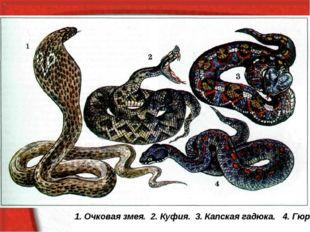 1. Очковая змея. 2. Куфия. 3. Капская гадюка. 4. Гюрза.