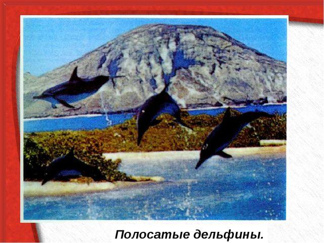 Полосатые дельфины.