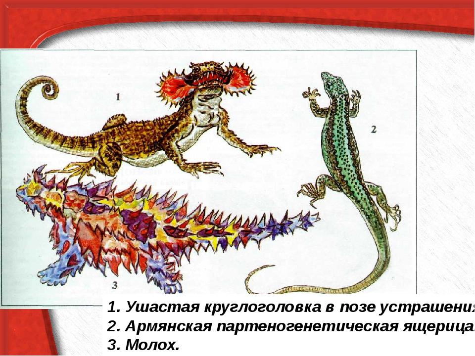 1. Ушастая круглоголовка в позе устрашения. 2. Армянская партеногенетическая...