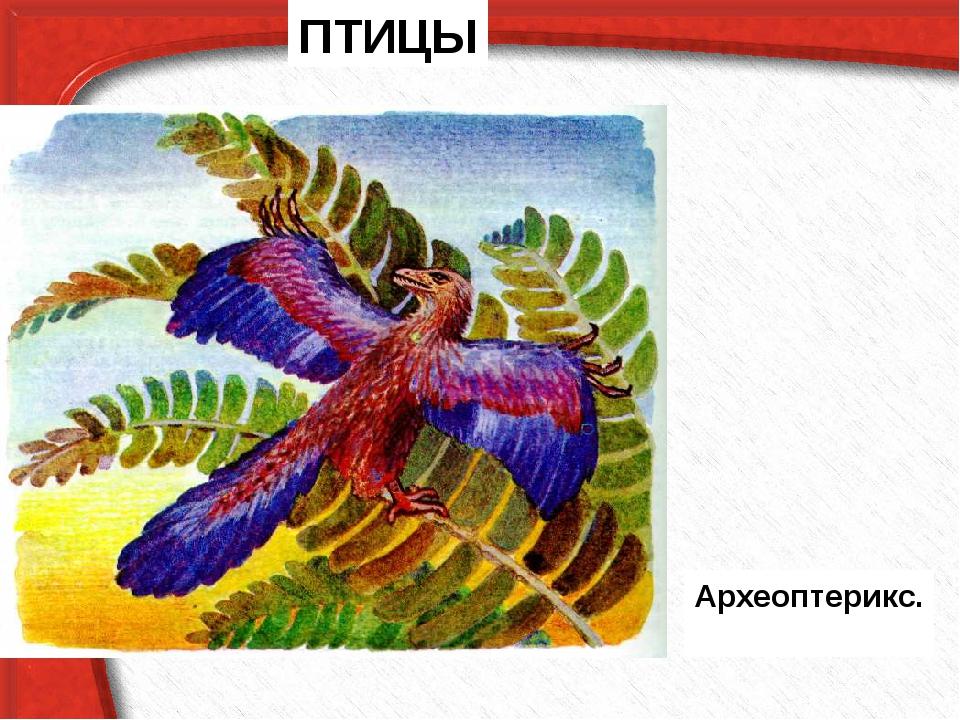 ПТИЦЫ Археоптерикс.