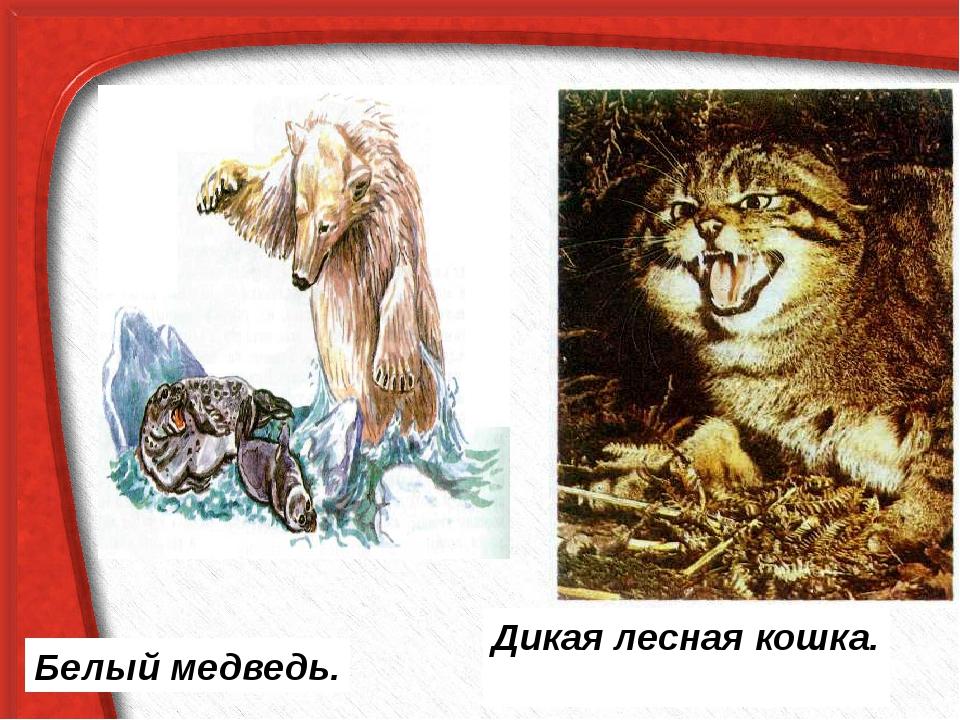 Дикая лесная кошка. Белый медведь.