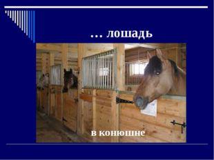 … лошадь