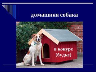 домашняя собака