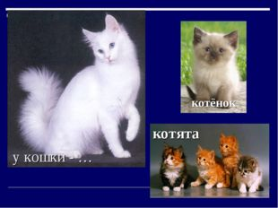 у кошки - … котята котёнок