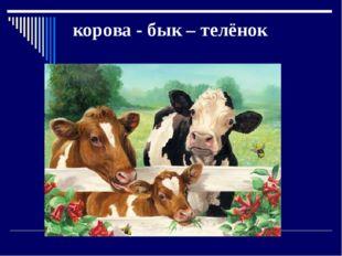 корова - бык – телёнок