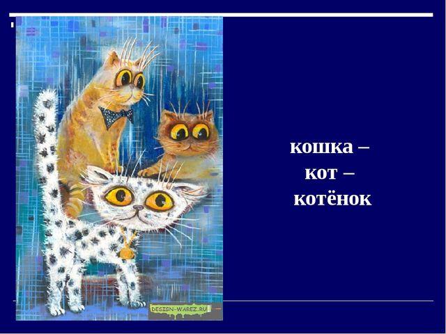 кошка – кот – котёнок