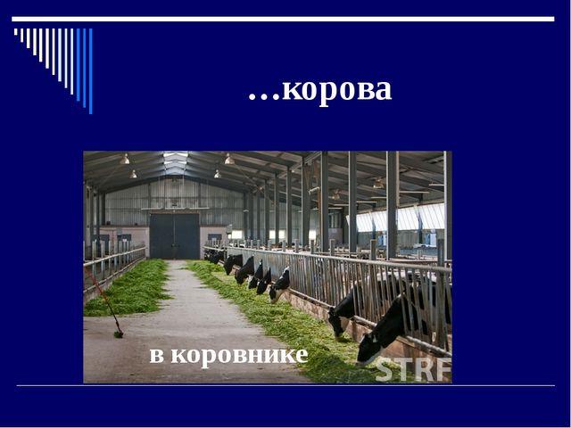 …корова