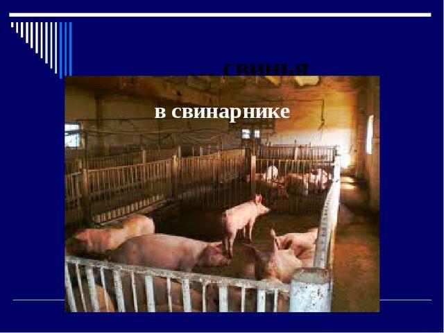 … свинья