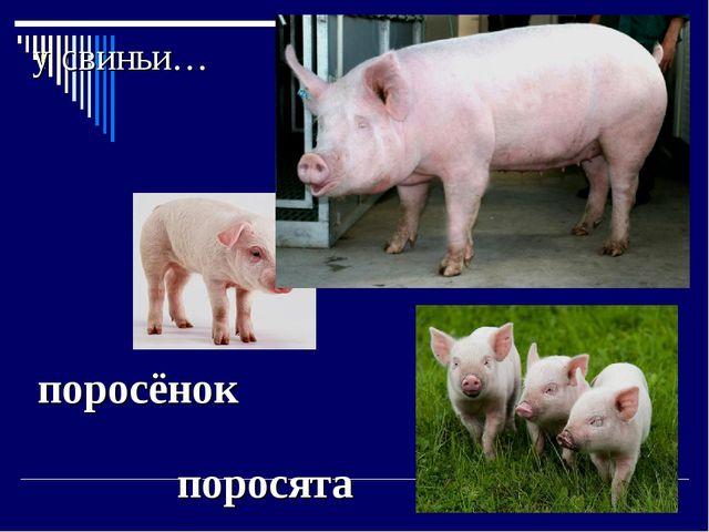 у свиньи… поросята поросёнок