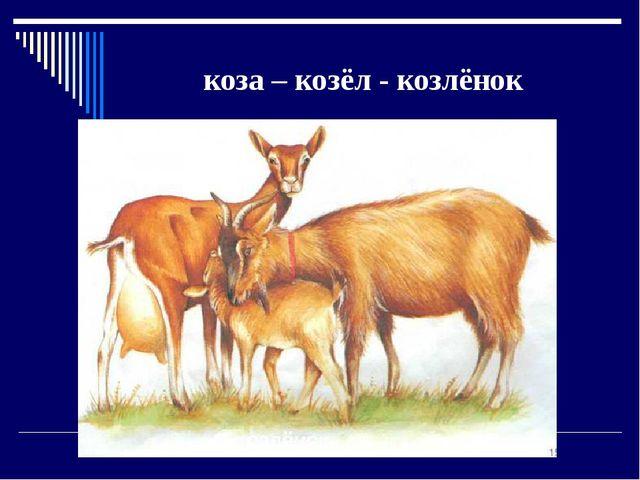 коза – козёл - козлёнок
