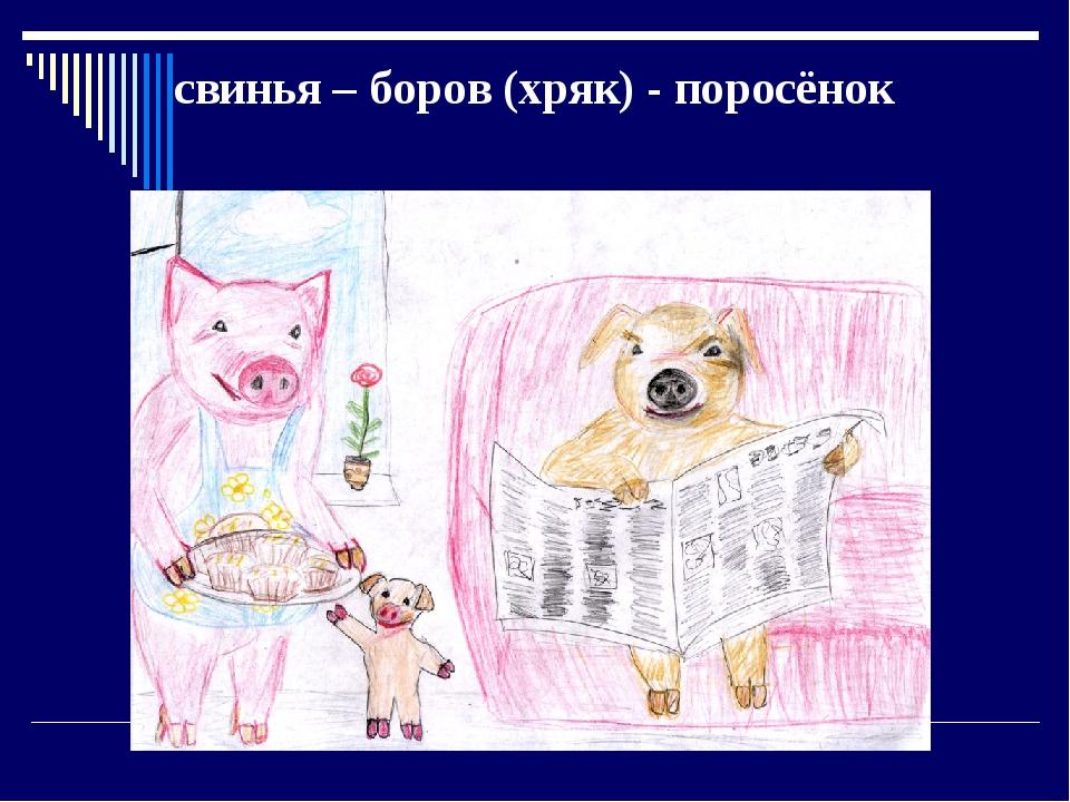 свинья – боров (хряк) - поросёнок