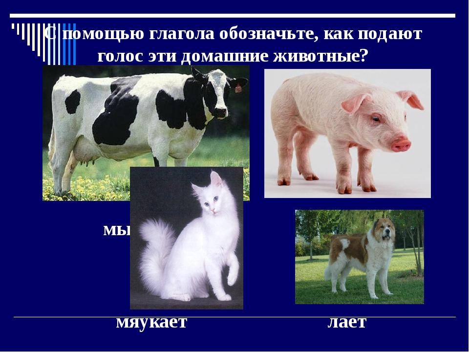 С помощью глагола обозначьте, как подают голос эти домашние животные? мычит...