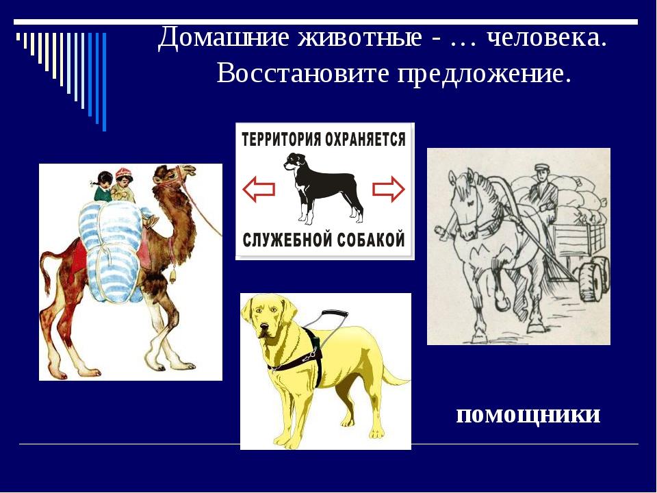 Домашние животные - … человека. Восстановите предложение. помощники