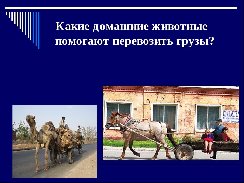 Какие домашние животные помогают перевозить грузы?