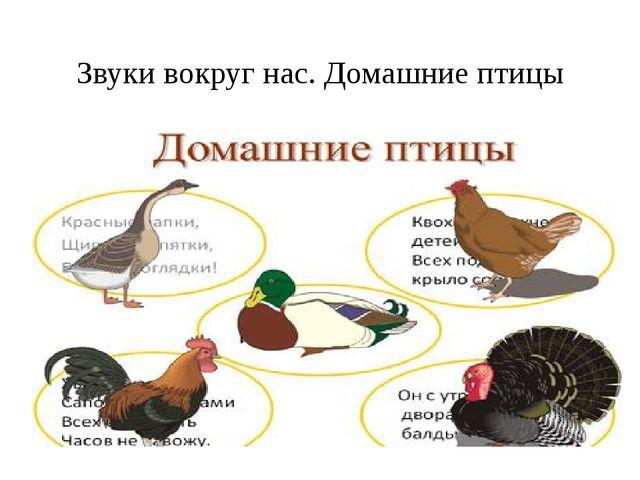 Звуки вокруг нас. Домашние птицы