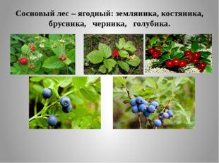 Сосновый лес – ягодный: земляника, костяника, брусника, черника, голубика.