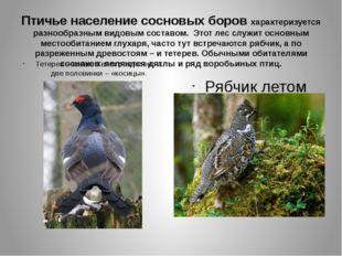 Птичье население сосновых боров характеризуется разнообразным видовым составо