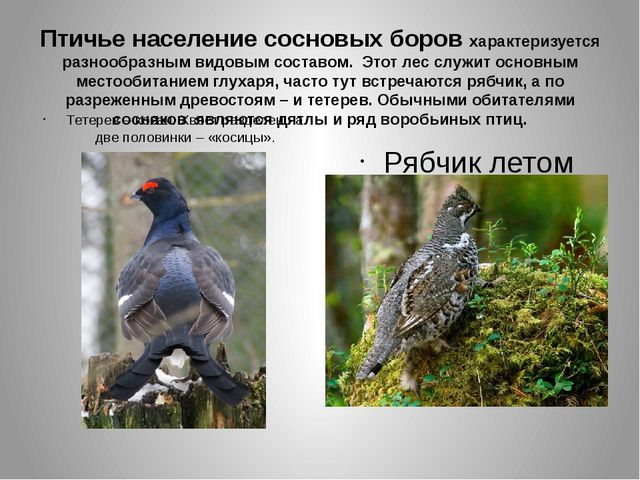 Птичье население сосновых боров характеризуется разнообразным видовым составо...