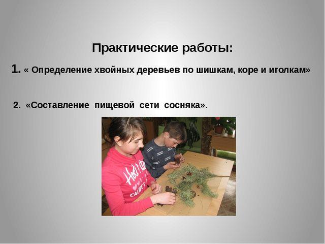 Практические работы: 1. « Определение хвойных деревьев по шишкам, коре и иго...