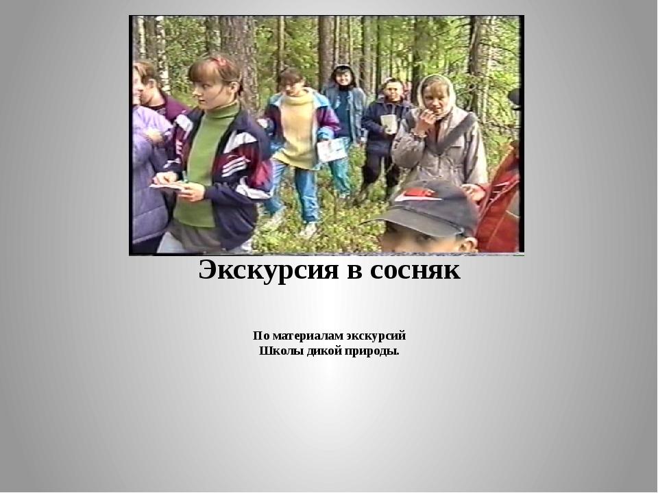 Экскурсия в сосняк По материалам экскурсий Школы дикой природы.