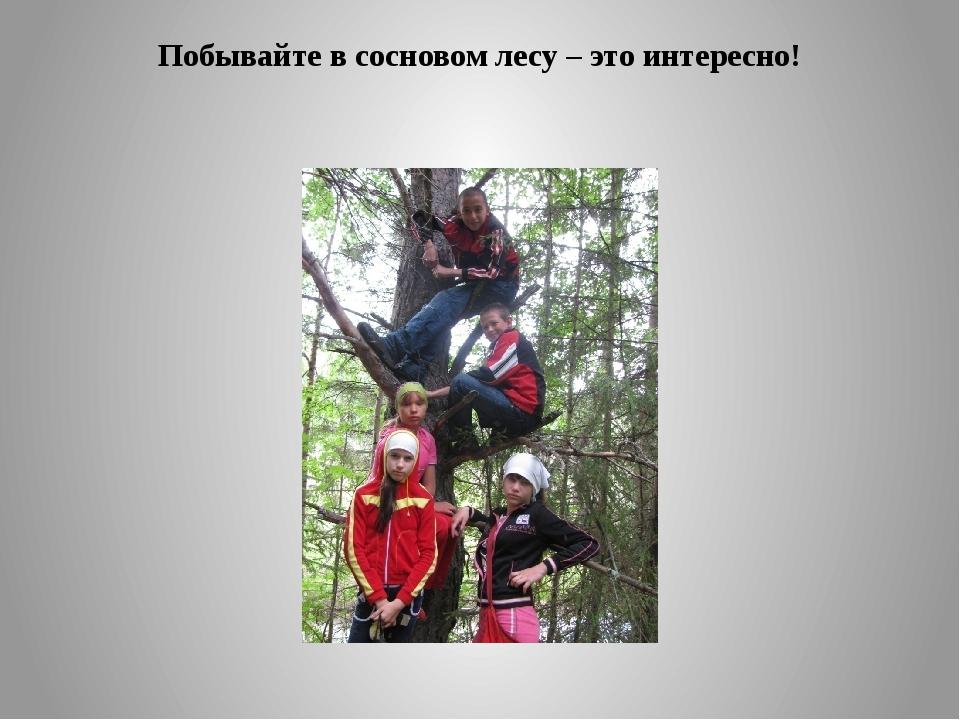 Побывайте в сосновом лесу – это интересно!