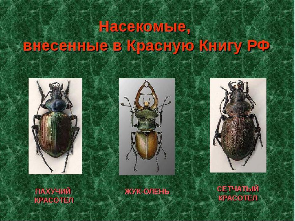 все жуки россии по картинками