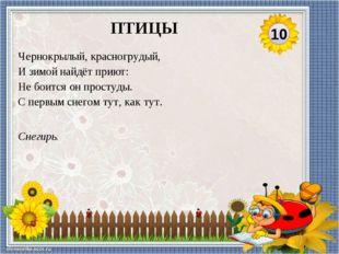 Соловей. Самая певчая птица России. 20 ПТИЦЫ
