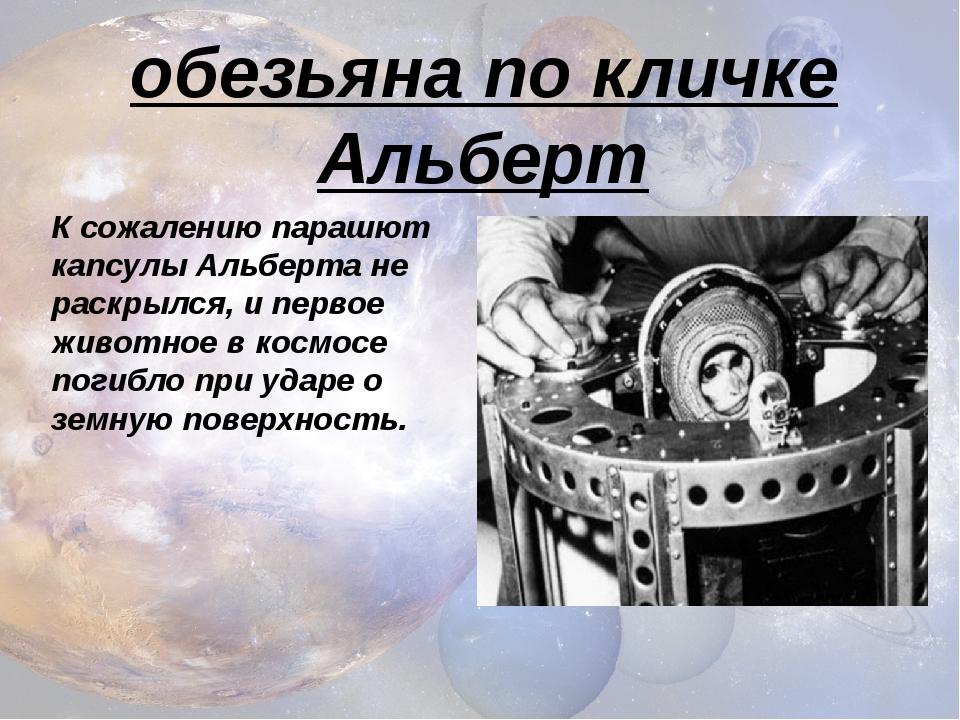 К сожалению парашют капсулы Альберта не раскрылся, и первое животное в космос...