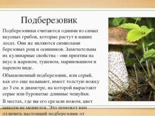 Подберезовик Подберезовики считаются одними из самых вкусных грибов, которые