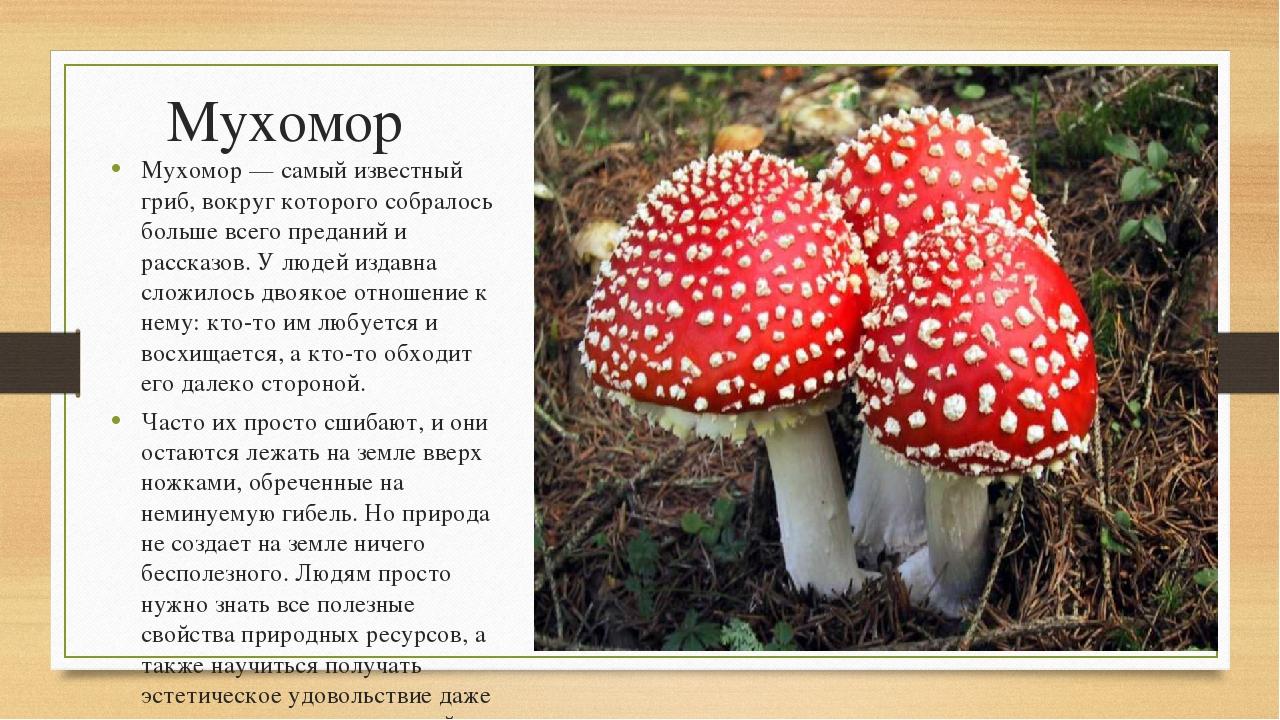 Мухомор Мухомор — самый известный гриб, вокруг которого собралось больше всег...