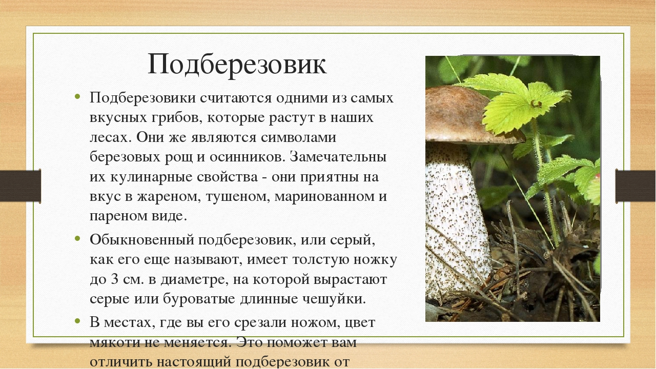 Подберезовик Подберезовики считаются одними из самых вкусных грибов, которые...