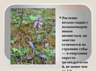 Пальчатокоренник Фукса— Dactylorhiza fuchsii(Druce) Soo Растение весьма схо