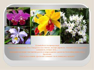 Полюбуйтесь на прекрасные орхидеи тропического леса. Они растут на стволах, н