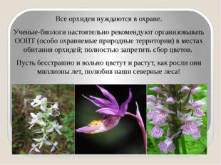 Все орхидеи нуждаются в охране. Ученые-биологи настоятельно рекомендуют орга