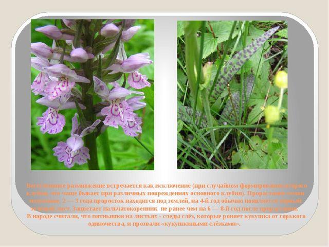 Вегетативное размножение встречается как исключение (при случайном формирова...