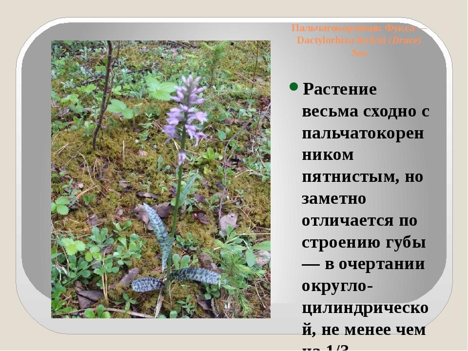 Пальчатокоренник Фукса— Dactylorhiza fuchsii(Druce) Soo Растение весьма схо...