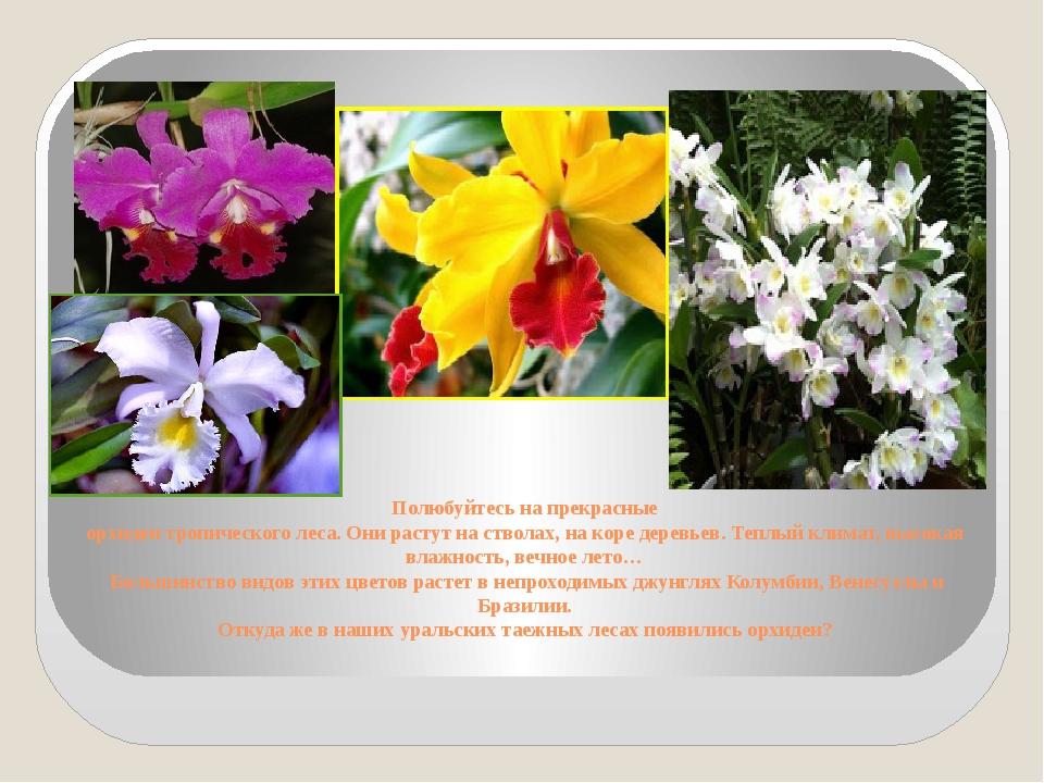 Полюбуйтесь на прекрасные орхидеи тропического леса. Они растут на стволах, н...