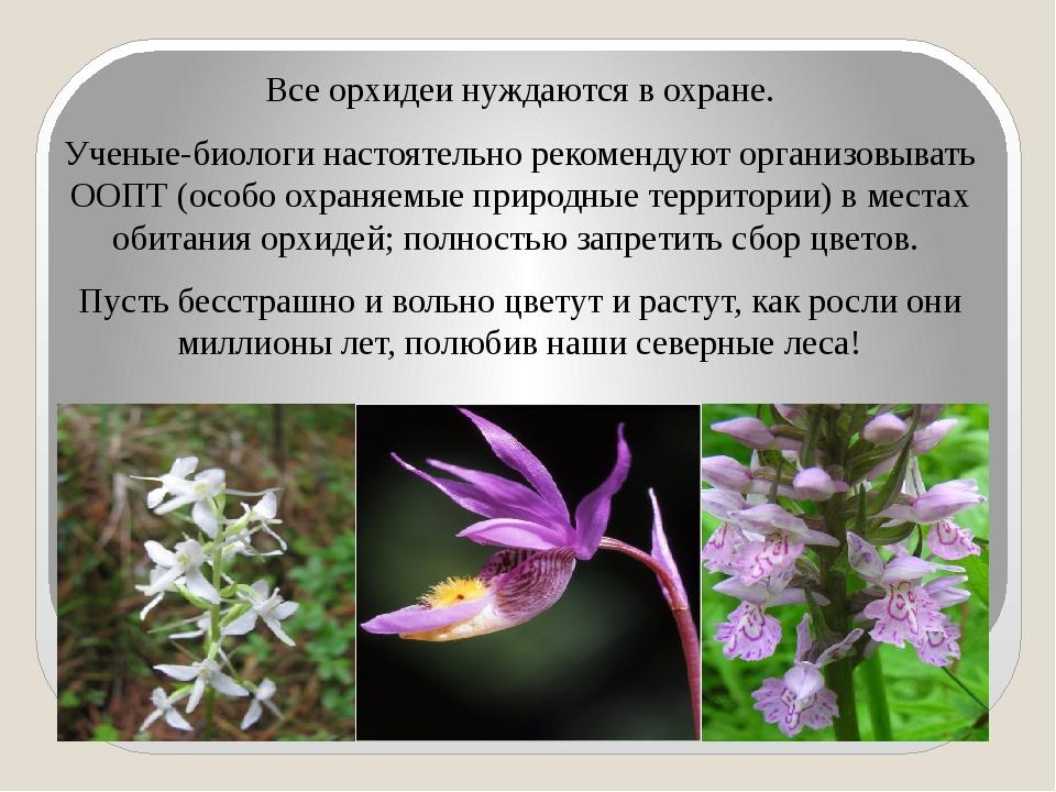 Все орхидеи нуждаются в охране. Ученые-биологи настоятельно рекомендуют орга...