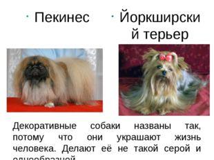 Декоративные собаки названы так, потому что они украшают жизнь человека. Дела