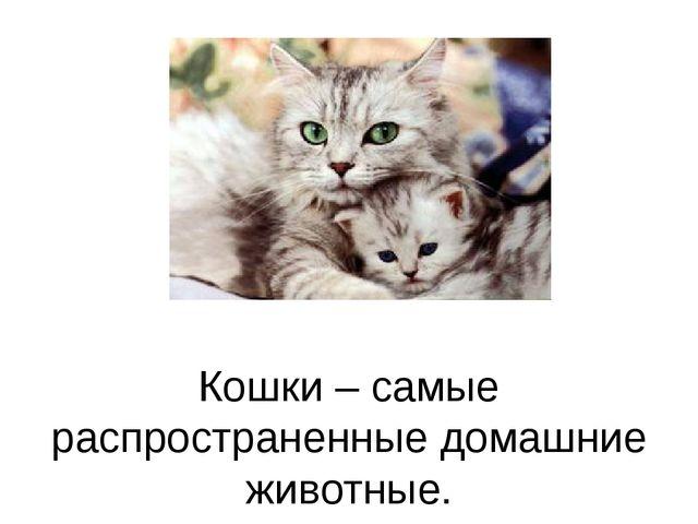 Кошки – самые распространенные домашние животные.