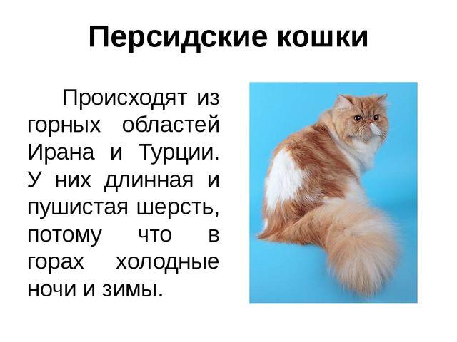 Персидские кошки Происходят из горных областей Ирана и Турции. У них длинная...