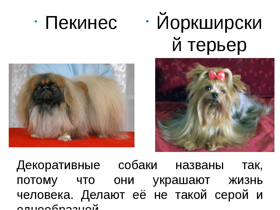 Декоративные собаки названы так, потому что они украшают жизнь человека. Дела...
