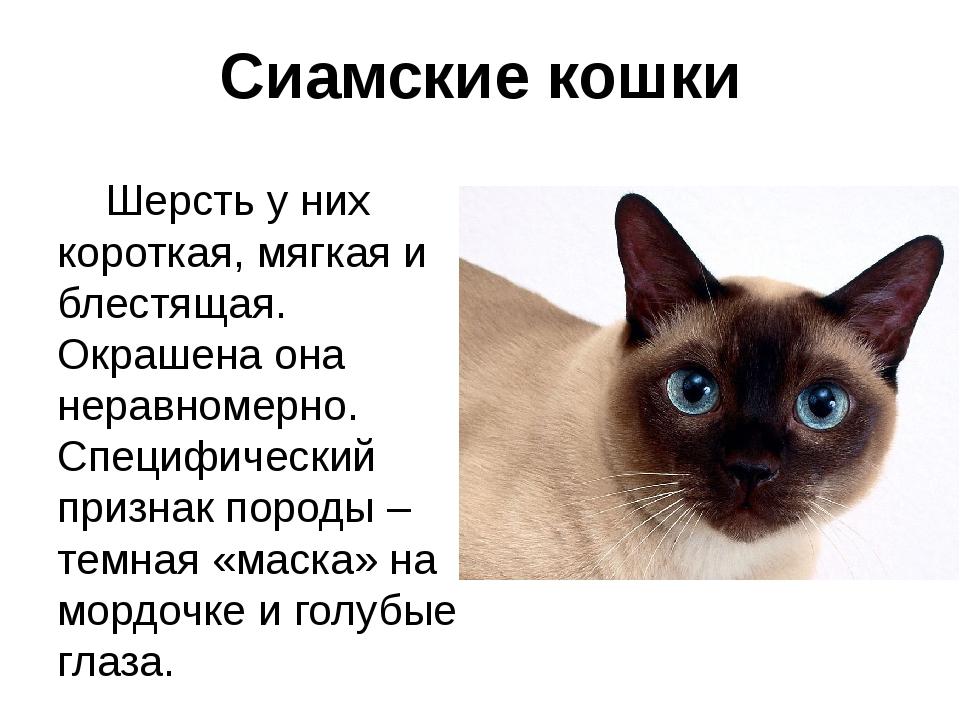 Сиамские кошки Шерсть у них короткая, мягкая и блестящая. Окрашена она неравн...