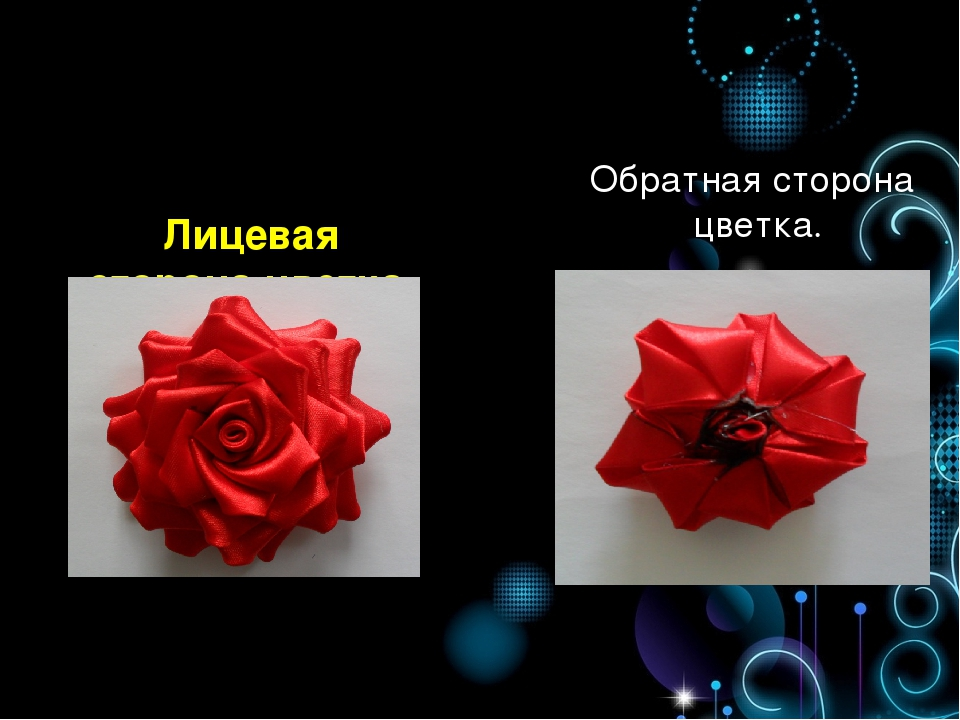 Лицевая сторона цветка. Обратная сторона цветка.