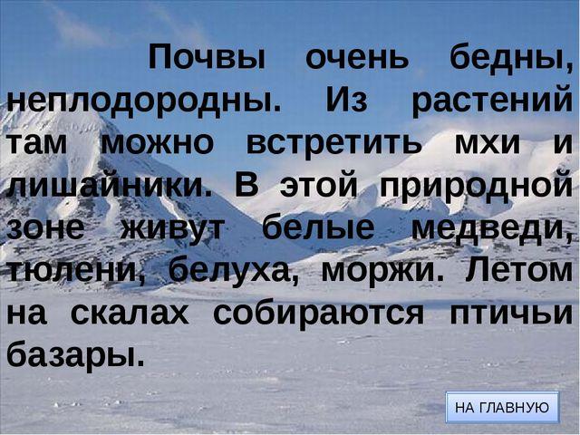 Тюлени ВЕРНУТЬСЯ