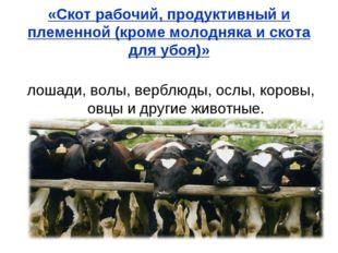«Скот рабочий, продуктивный и племенной (кроме молодняка и скота для убоя)» л