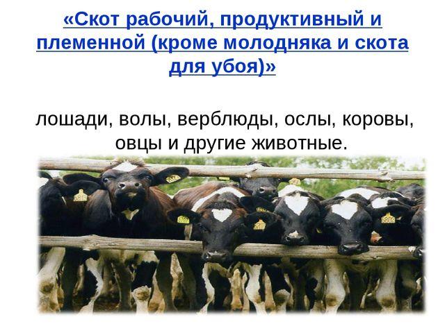 «Скот рабочий, продуктивный и племенной (кроме молодняка и скота для убоя)» л...